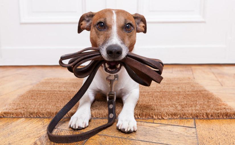 Geen hondenbelasting meer in Hoeilaart!
